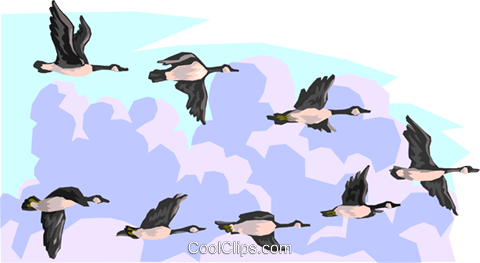 Flying geese Royalty Free Vector Clip Art illustration anim1612