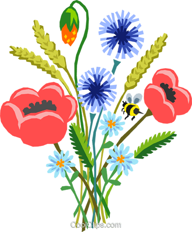 Poppy bouquet Royalty Free Vector Clip Art illustration natu0800