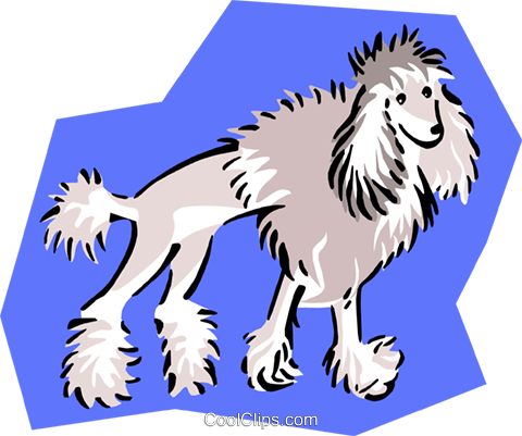 clipped poodle Royalty Free Vector Clip Art illustration anim1681
