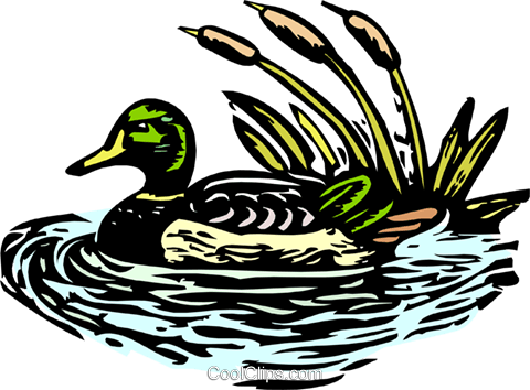 mallard duck Royalty Free Vector Clip Art illustration anim1934