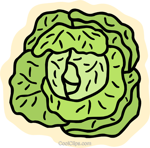 lettuce Royalty Free Vector Clip Art illustration food1044