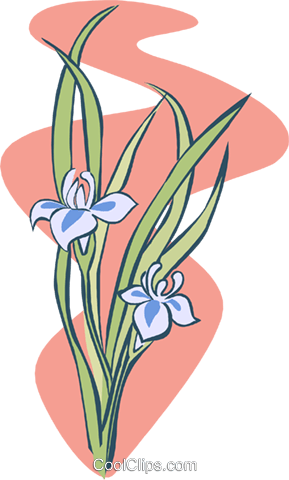 two flowers Royalty Free Vector Clip Art illustration natu0892