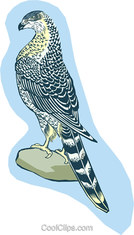 bird Royalty Free Vector Clip Art illustration anim2047