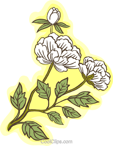 white flowers Royalty Free Vector Clip Art illustration natu0927