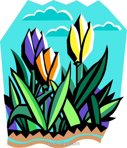 tulips Royalty Free Vector Clip Art illustration natu0947