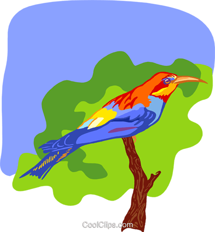 bird Royalty Free Vector Clip Art illustration anim2159
