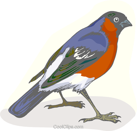 Colorful robin Royalty Free Vector Clip Art illustration anim2166