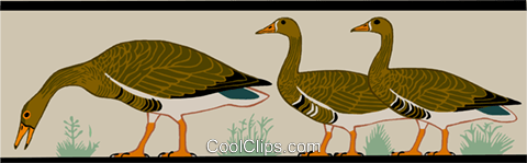 geese Royalty Free Vector Clip Art illustration anim2167