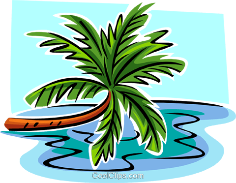 leaning palm tree Royalty Free Vector Clip Art illustration natu0984