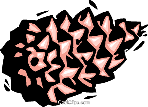 pine cone Royalty Free Vector Clip Art illustration natu0987