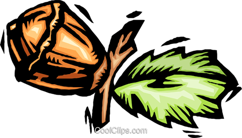 acorn Royalty Free Vector Clip Art illustration natu0995