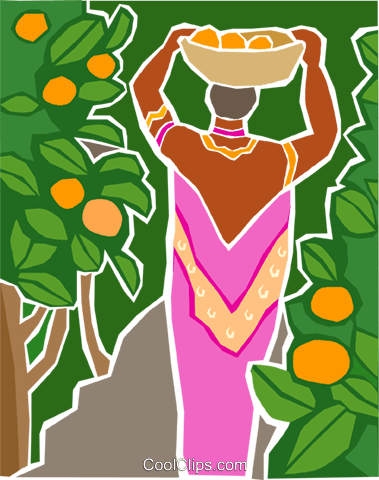 woman harvesting fruit from an orchard Royalty Free Vector Clip Art illustration indu1045