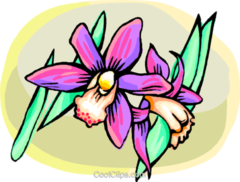 Orchids Royalty Free Vector Clip Art illustration natu1001