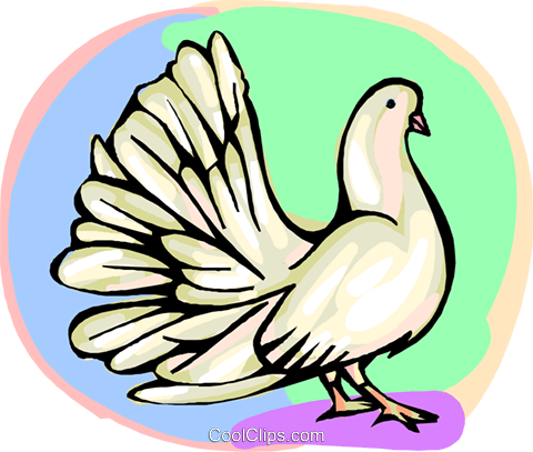 White dove Royalty Free Vector Clip Art illustration anim2199