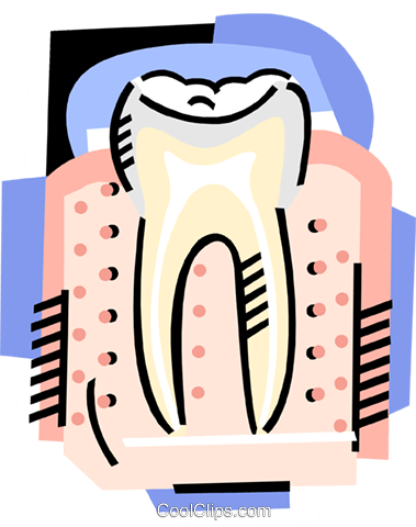 The tooth Royalty Free Vector Clip Art illustration medi0387