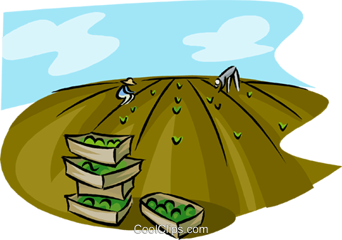 workers harvesting a crop in a field Royalty Free Vector Clip Art illustration indu1124