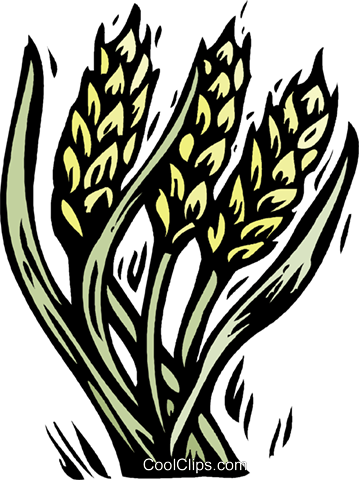 grain, woodcut style Royalty Free Vector Clip Art illustration vc001347