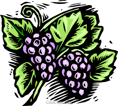grapes, woodcut style Royalty Free Vector Clip Art illustration vc001352