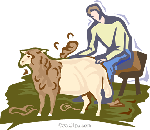 sheep shearing Royalty Free Vector Clip Art illustration vc001999