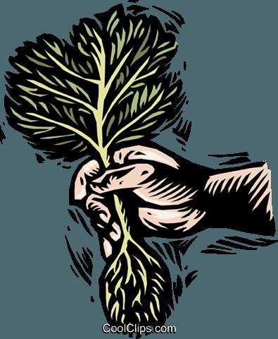 种植一棵小树 免版税矢量剪贴画插图