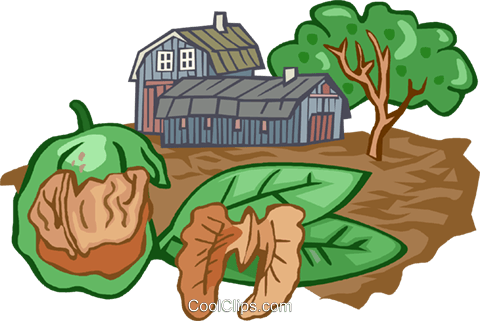 walnut farming Royalty Free Vector Clip Art illustration vc002531