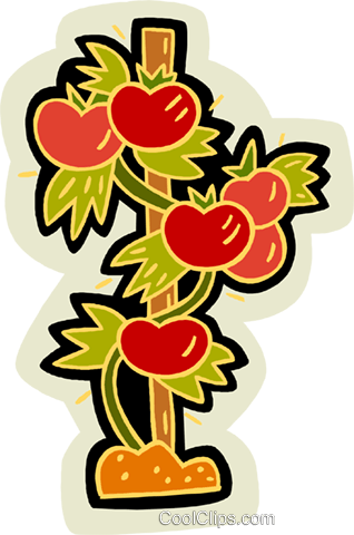 tomatoes Royalty Free Vector Clip Art illustration vc007574