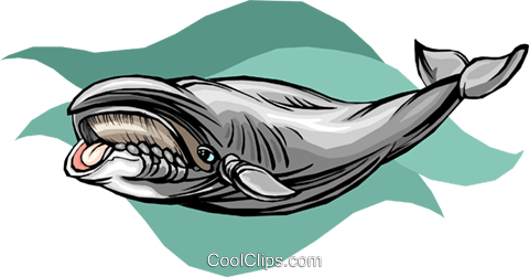 whale Royalty Free Vector Clip Art illustration vc010500