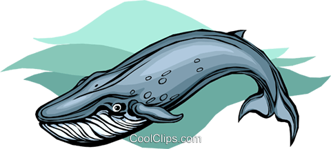 Blue Whale Royalty Free Vector Clip Art illustration vc010517