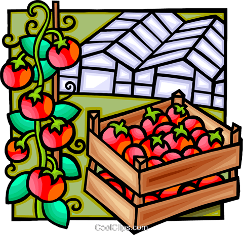 green house, tomatoes Royalty Free Vector Clip Art illustration vc012260