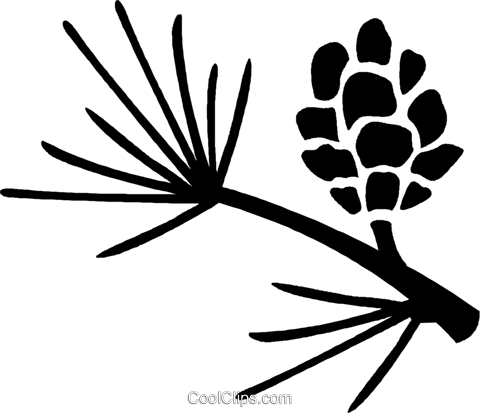 pine leaves and pinecone Royalty Free Vector Clip Art illustration vc027081