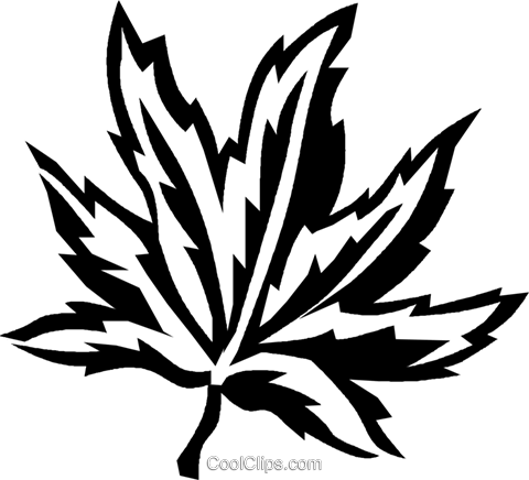 Japanese maple Royalty Free Vector Clip Art illustration vc027424