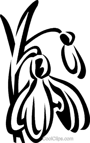 snowdrops Royalty Free Vector Clip Art illustration vc027428