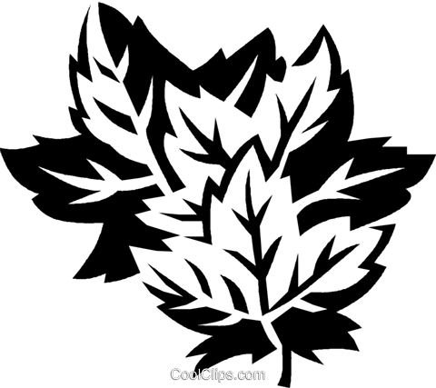 maple leaves Royalty Free Vector Clip Art illustration vc027430