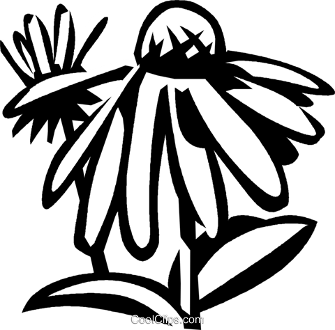 cone flower Royalty Free Vector Clip Art illustration vc027553