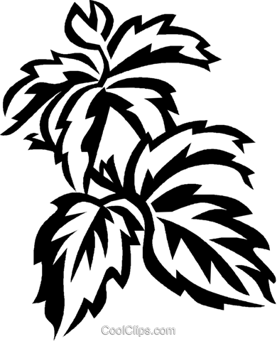 Virginia creeper Royalty Free Vector Clip Art illustration vc027559