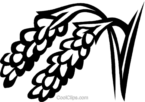 rice Royalty Free Vector Clip Art illustration vc029305
