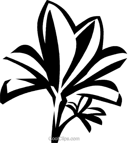 mangrove Royalty Free Vector Clip Art illustration vc029324