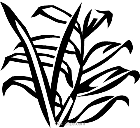 palm Royalty Free Vector Clip Art illustration vc029340