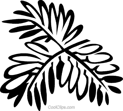 mimosa Royalty Free Vector Clip Art illustration vc029350