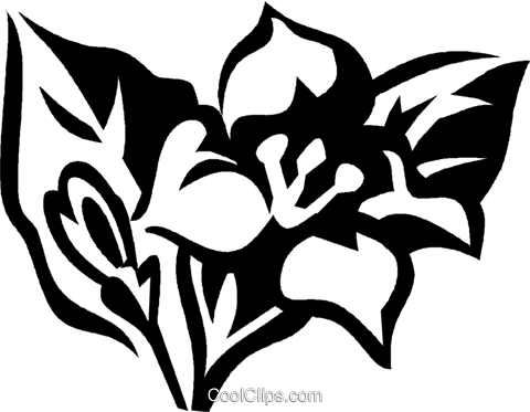 weigela Royalty Free Vector Clip Art illustration vc029359
