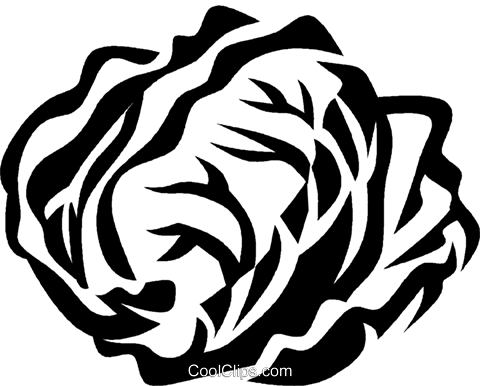 radicchio Royalty Free Vector Clip Art illustration vc029375