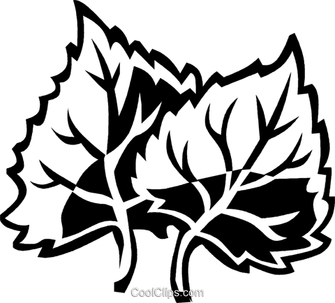 cottonwood Royalty Free Vector Clip Art illustration vc029499