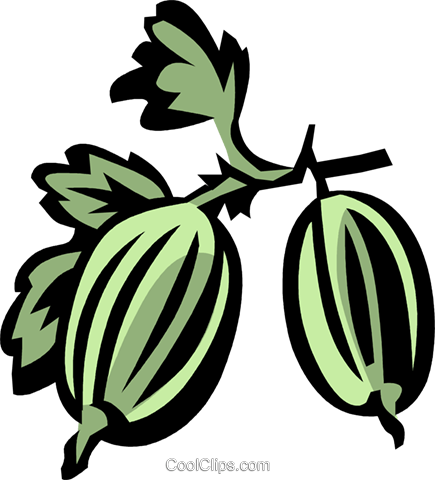 gooseberries Royalty Free Vector Clip Art illustration vc031972