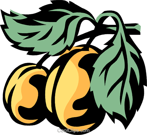 apricots Royalty Free Vector Clip Art illustration vc031980