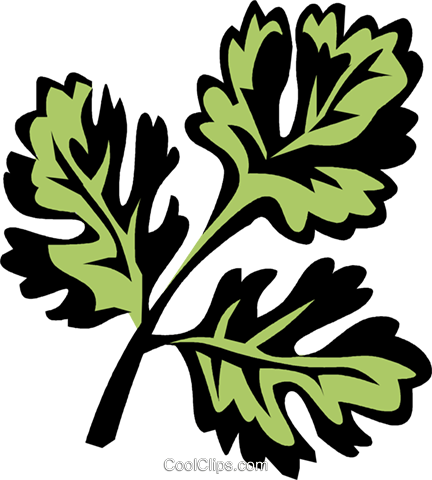 coriander Royalty Free Vector Clip Art illustration vc031984