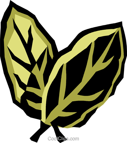 bay leaves Royalty Free Vector Clip Art illustration vc032053