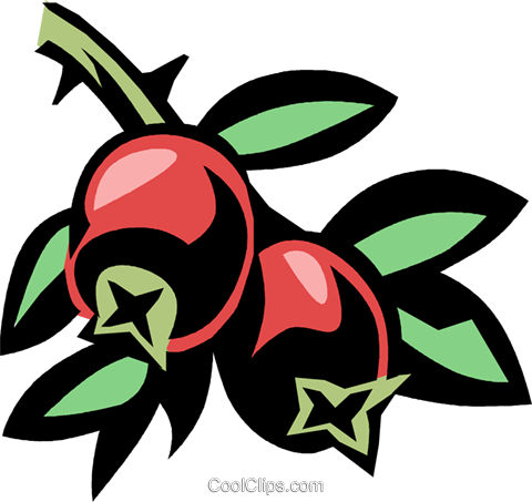 cranberry Royalty Free Vector Clip Art illustration vc032058