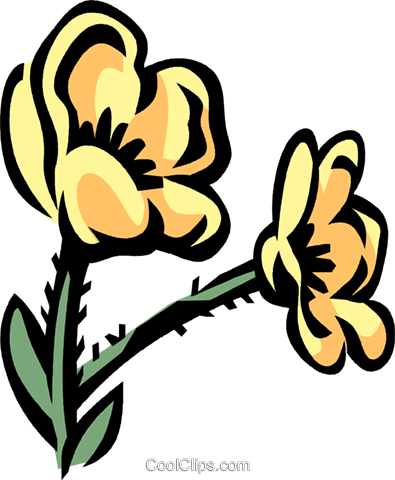 buttercup Royalty Free Vector Clip Art illustration vc032068
