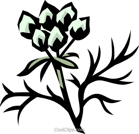 coriander Royalty Free Vector Clip Art illustration vc032079