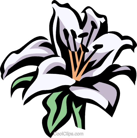 lilium Royalty Free Vector Clip Art illustration vc032090
